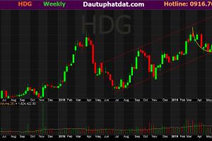 đồ thị tuần cổ phiếu HDG